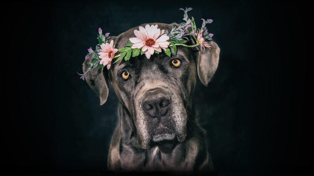 portrait chien shooting studio fleur