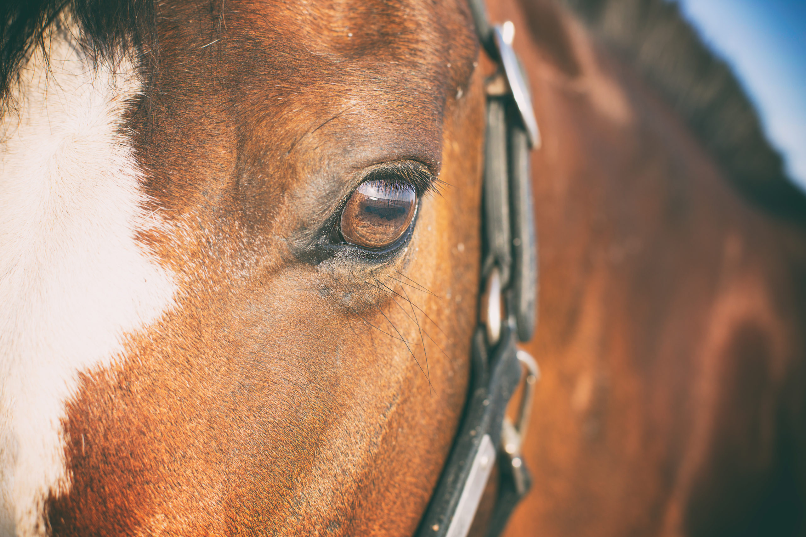 photographe animaux de compagnie, cheval
