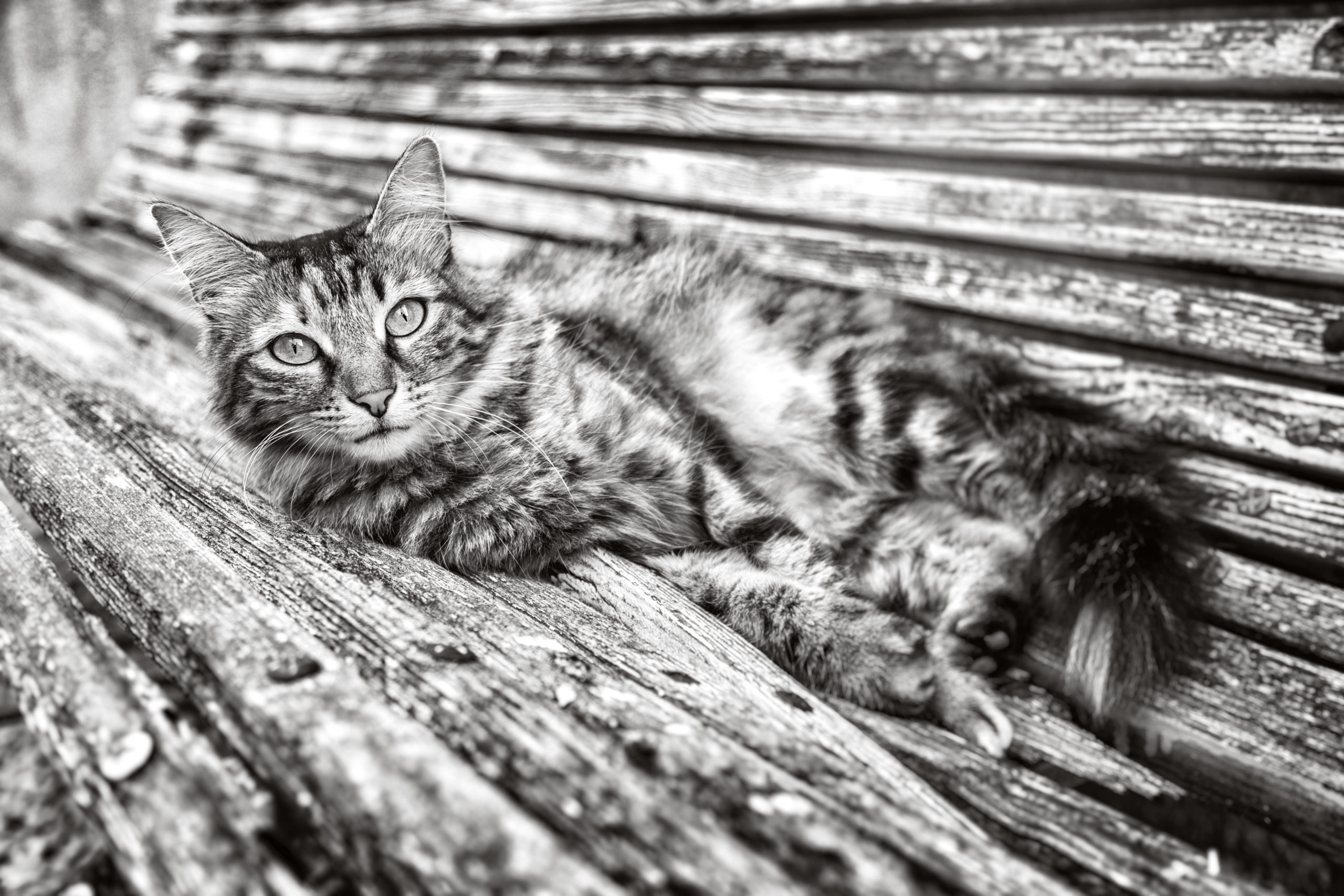 Photographe animal de compagnie, chat