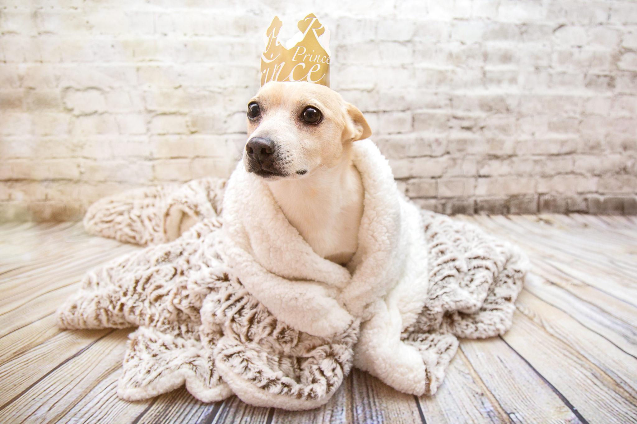 Photographe animal de compagnie, chien, déguisement