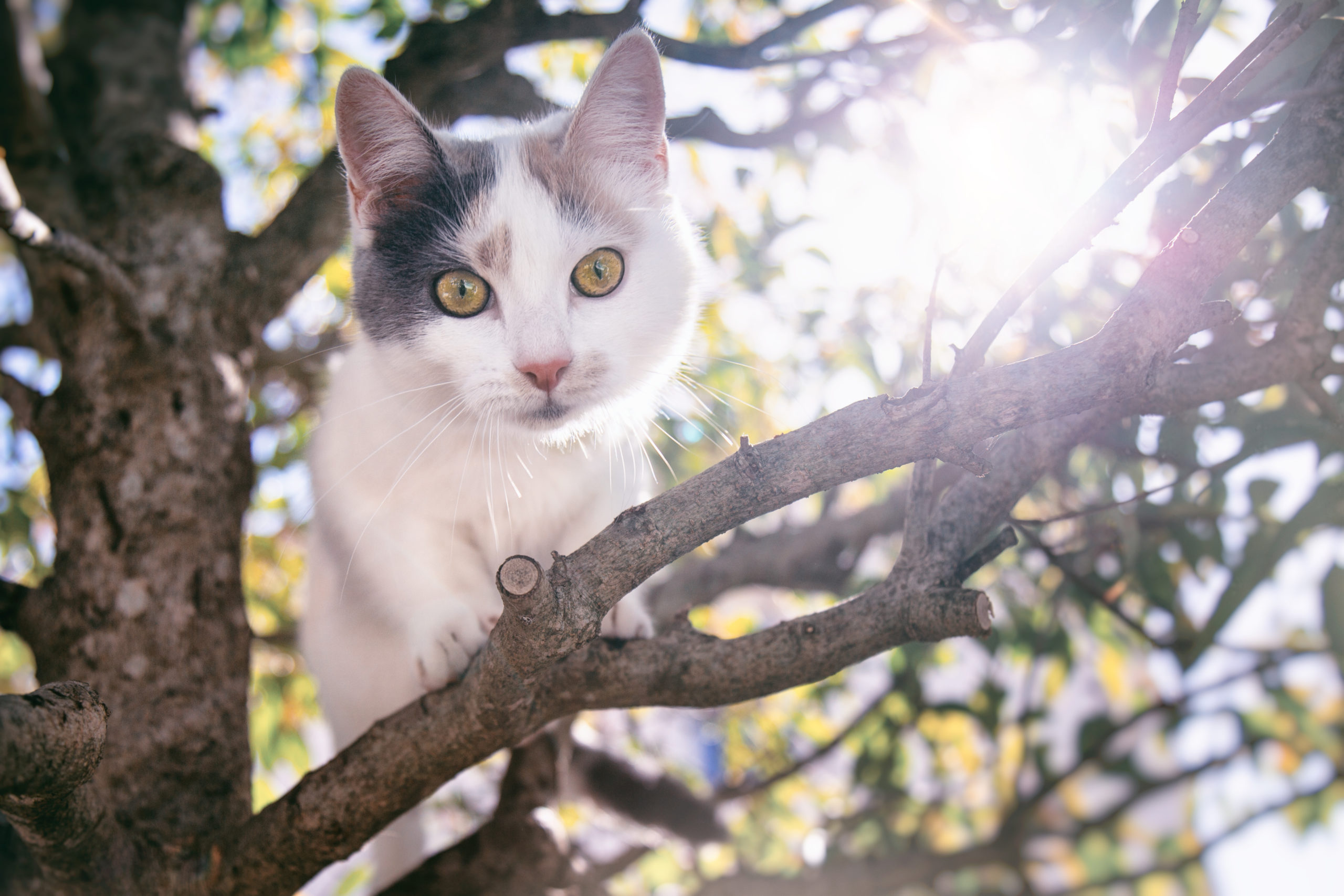 Photographe animal de compagnie, chat,Eternel Présent, PetShoot photographie