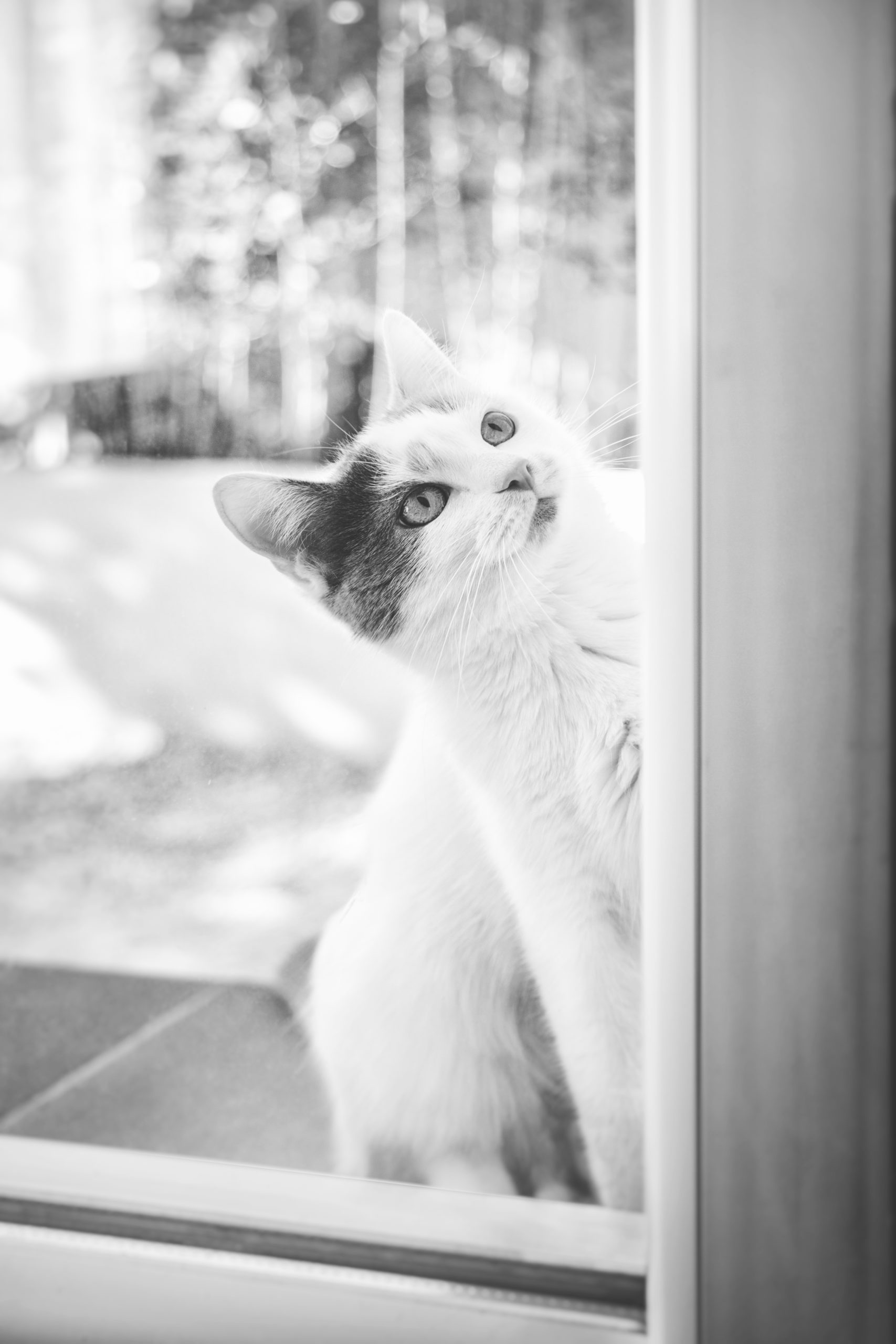 Photographe animal de compagnie, chat, PetShoot Photographie