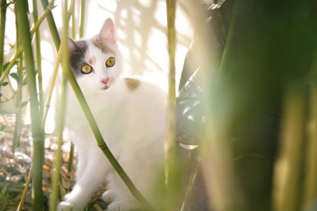 Photographe animal de compagnie, chat, PetShoot Photographie