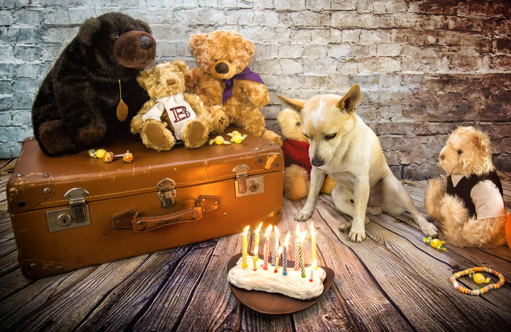 Photographe animal de compagnie, chien, anniversaire