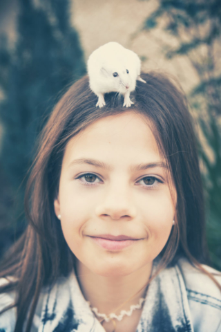 Photographe animaux de compagnie, hamster