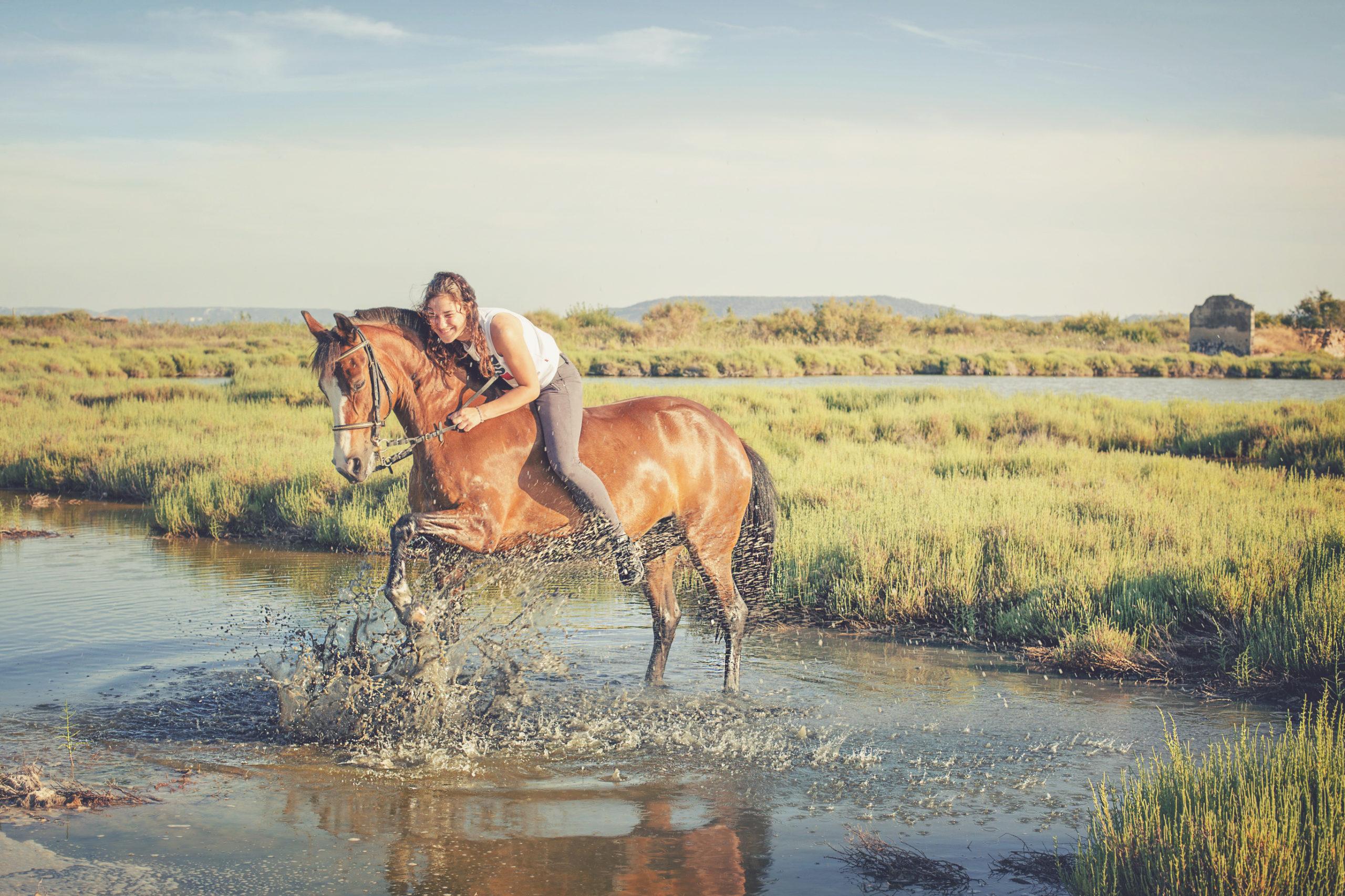 Photographe animaux de compagnie, cheval, cavalière