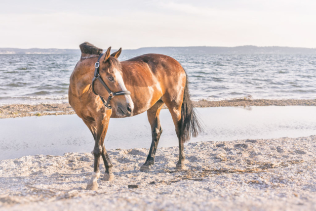 Photographe animal de compagnie, cheval