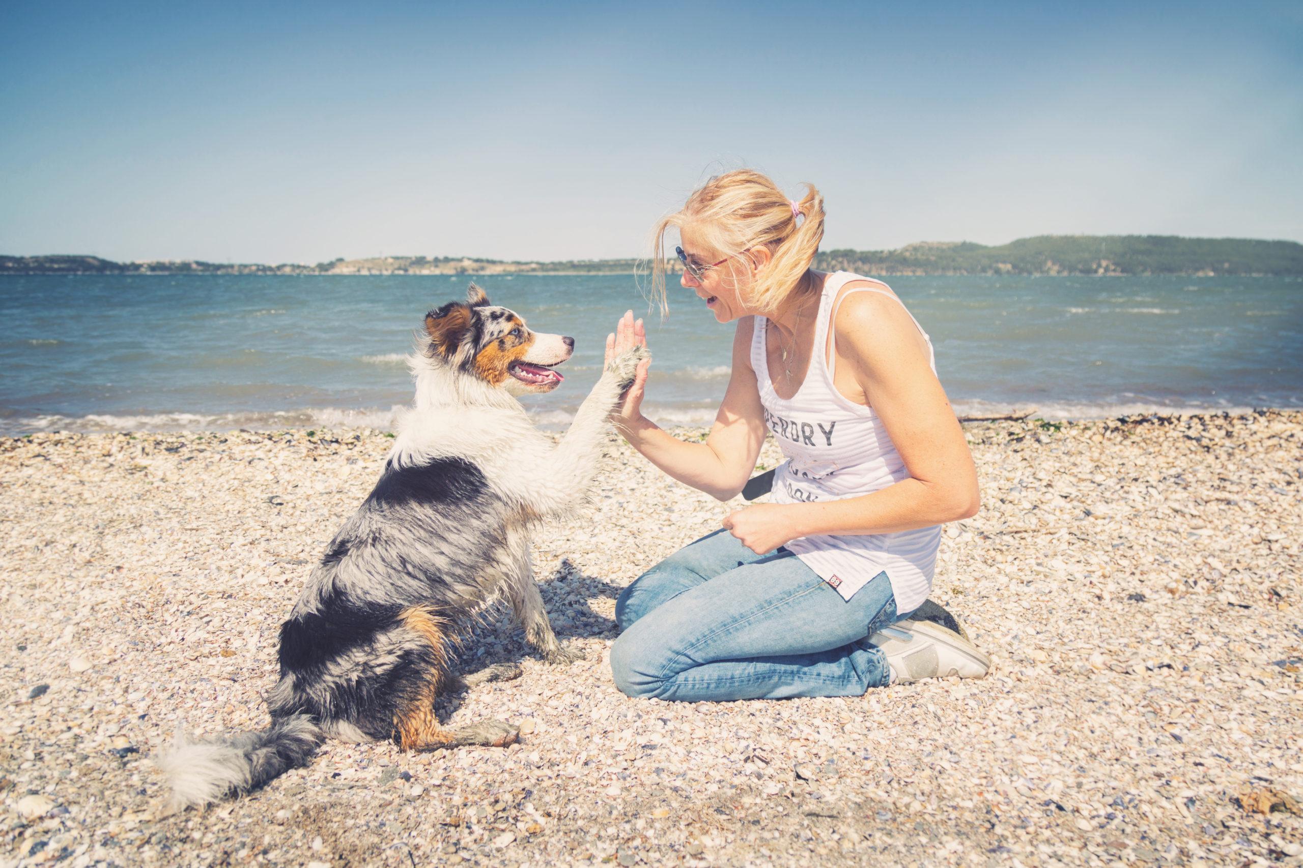 Photographe animal de compagnie, portrait maître chien, chien, berger australien