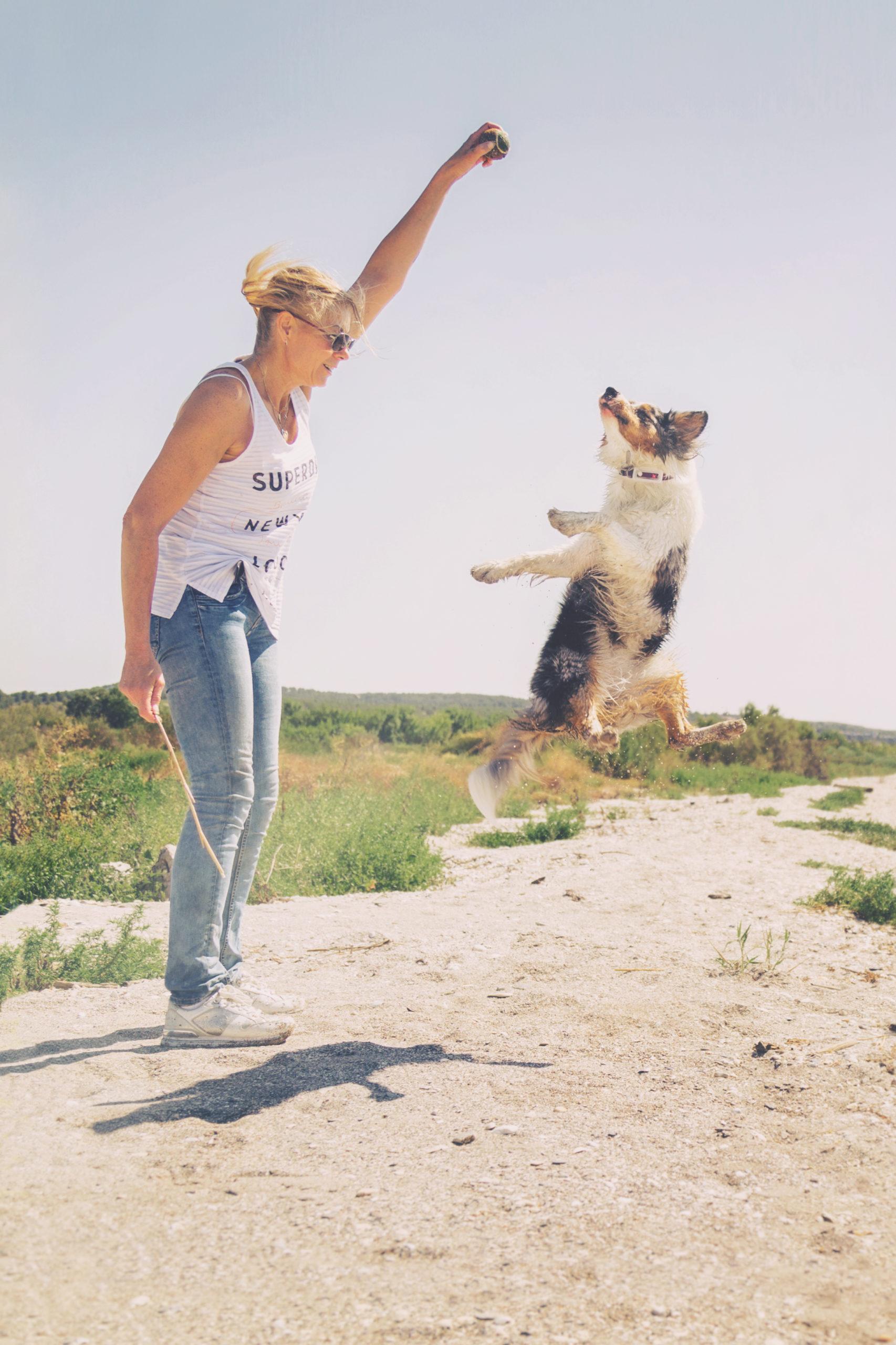 Photographe animal de compagnie, portrait maître chien, berger australien